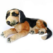 16 -inches German Shepherd Pup
